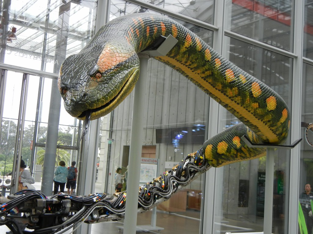 3d Movie Wallpaper Animatronic Snake At Cal Academy From Anaconda Movie