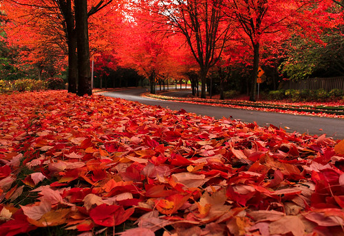 Portland Oregon Fall Had Wallpaper Autumn Quot Snow Quot The Quot Snow Quot Of Autumn As The Leaves Fall