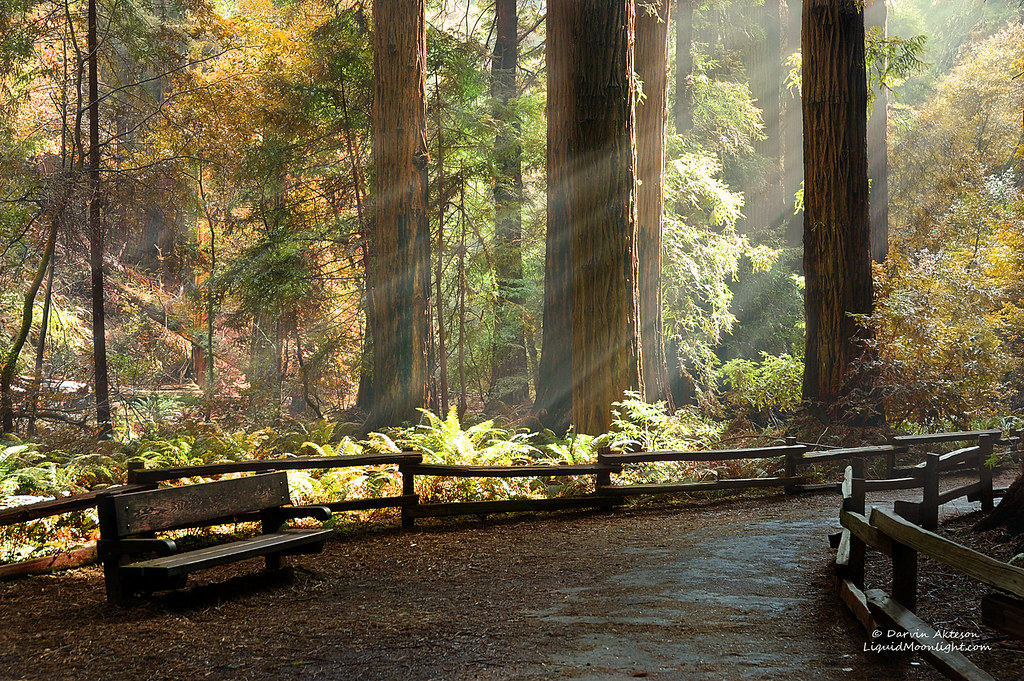 3d Fall Wallpaper Afternoon In A Redwood Forest Preferred Viewing