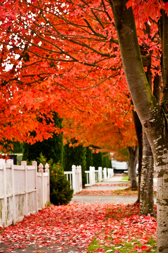 Fall Wallpaper Phone Red Fall Sidewalk A Sidewalk Covered With Red Fall