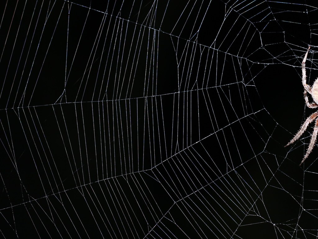 Create Animated Wallpaper Spiderweb Background Iii 4x3 I D Taken An Earlier