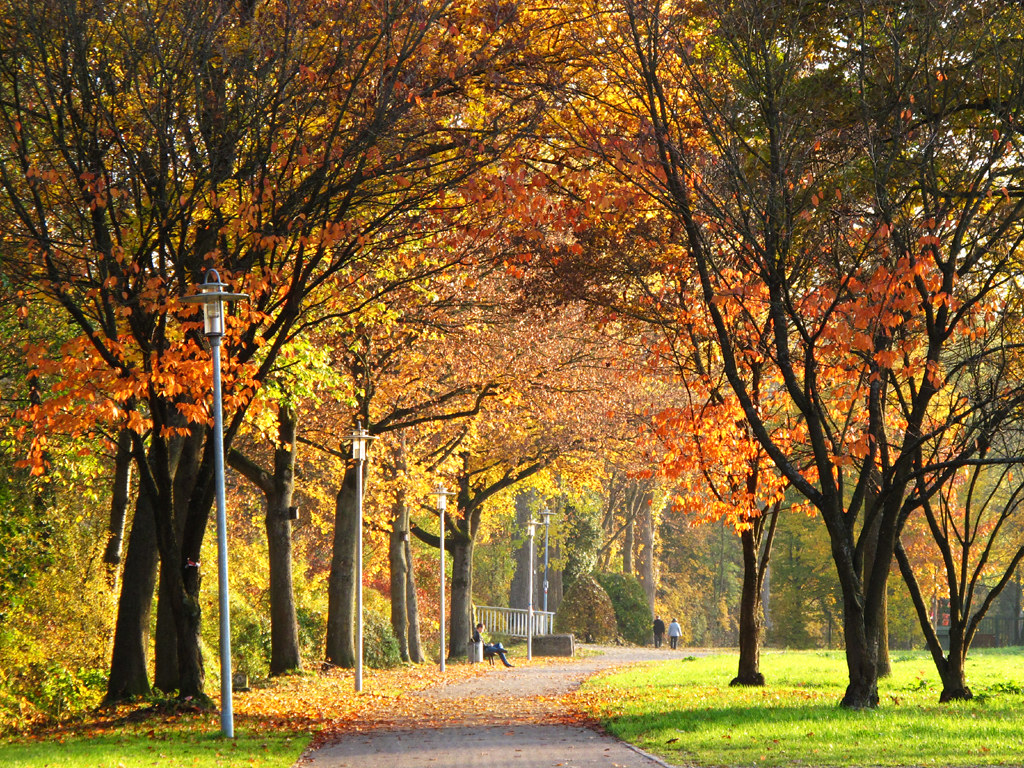 Fall Scene Desktop Wallpaper Autumn Walk In The Park