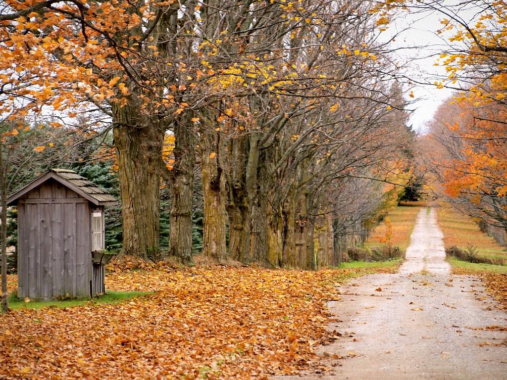 Free Fall Screensavers And Wallpaper Fallen Leaves The Leaves Rustle As The Crisp Fall Air