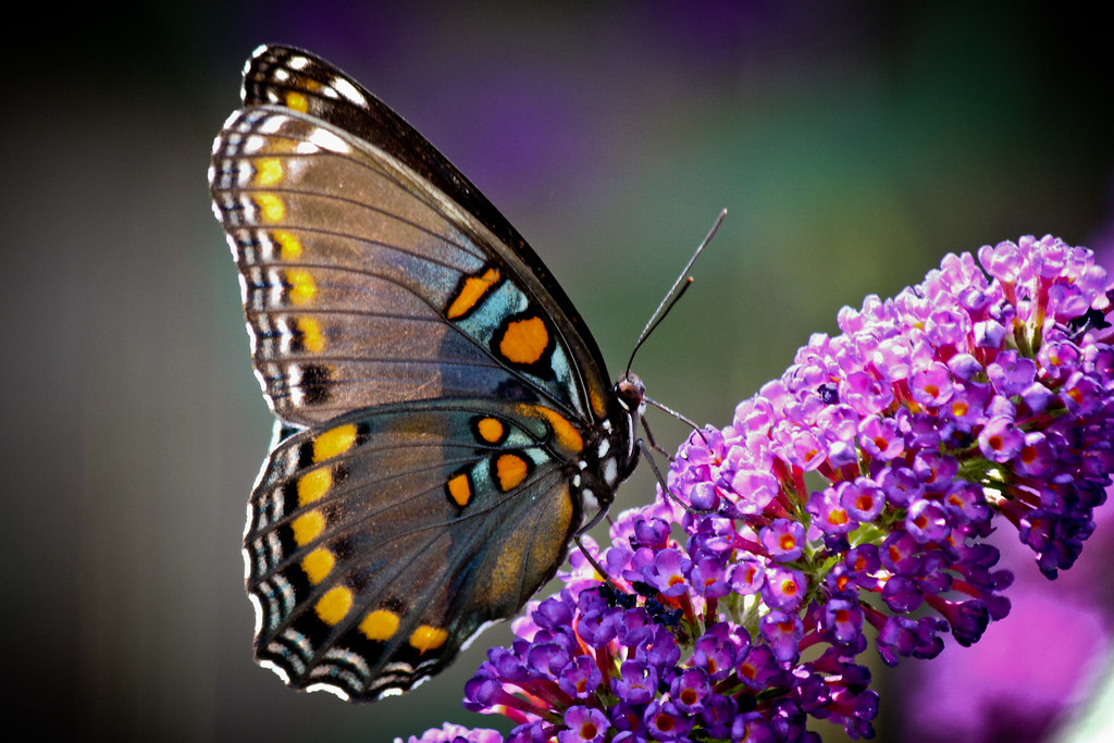 Free Wallpaper 3d Hd Butterfly Sides A Butterfly Profile Shot While Sitting