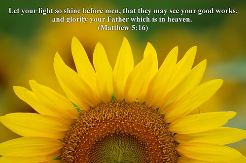 Before I Fall Quotes Iphone Wallpaper Sunflower Let Your Light Shine Before Men That They May