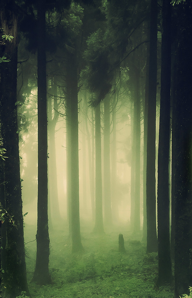 How To Get Old Iphone Wallpapers Back Woods Dark Amp Deep View On White Dr Sayan Das Flickr