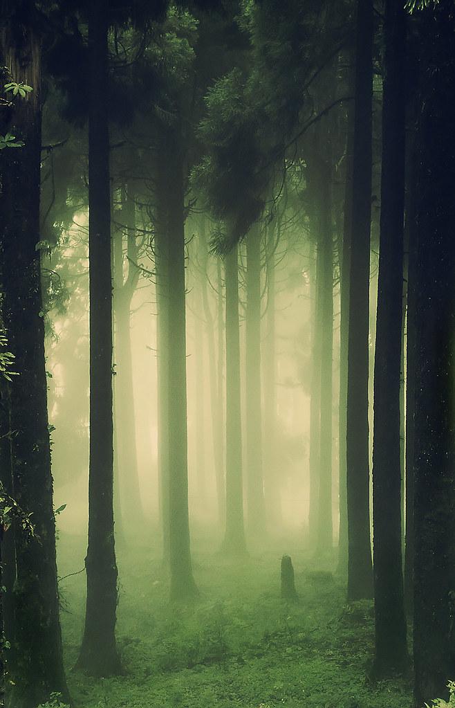 Lost Girl Wallpaper Hd Woods Dark Amp Deep View On White Dr Sayan Das Flickr