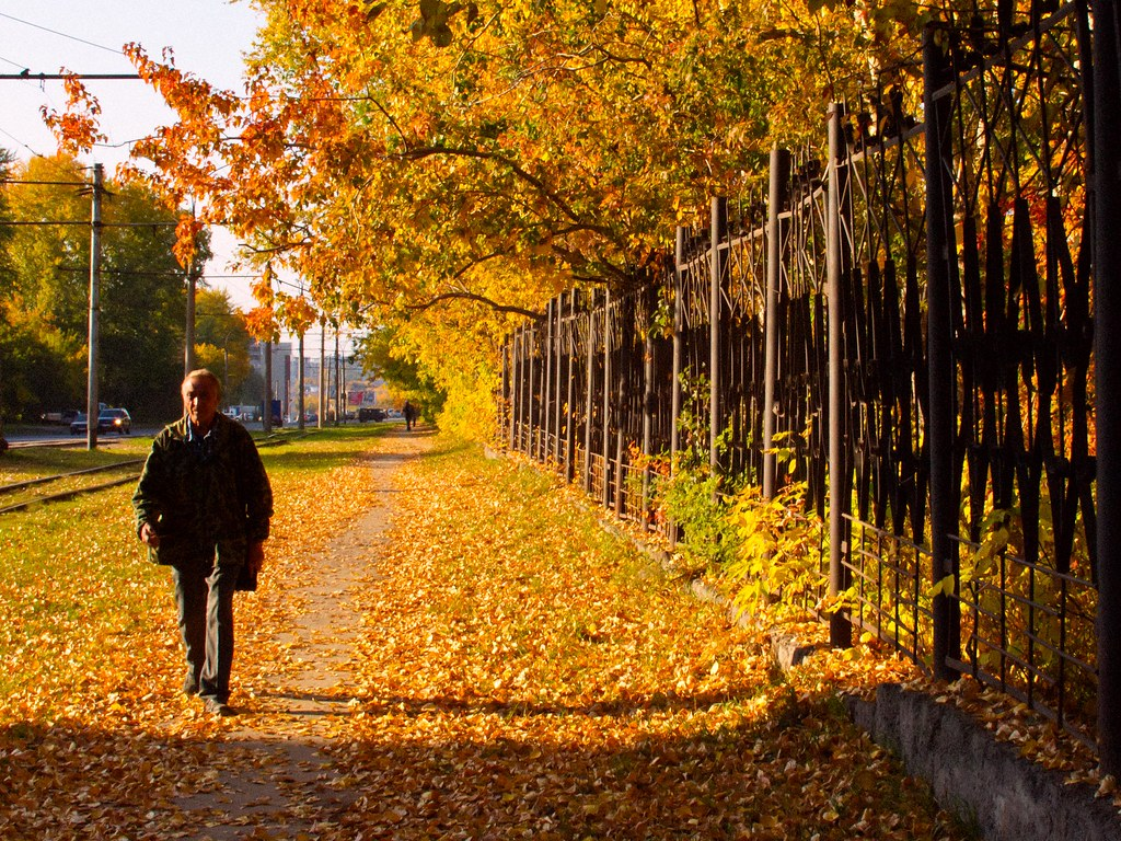 New 3d Wallpaper For Pc Golden Autumn On The Street Novosibirsk Siberia 19