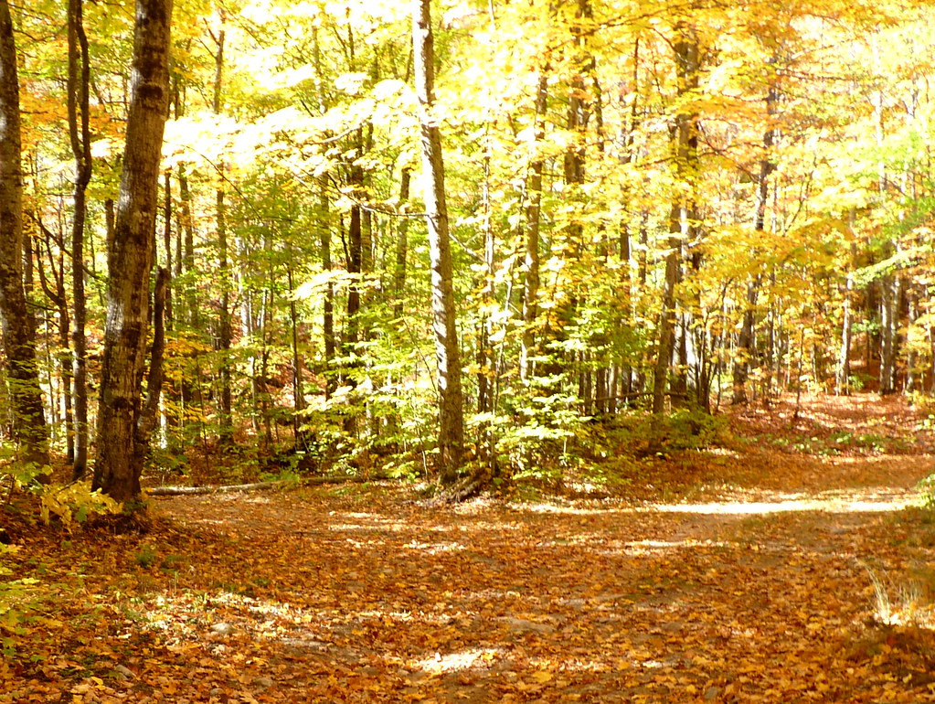 Fall Leaves Wallpaper Free Two Roads Diverged In A Yellow Wood With Leaves No