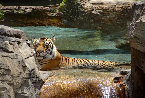 Wallpaper Of Water Fall Waterfall Tiger Lee Hayes Flickr