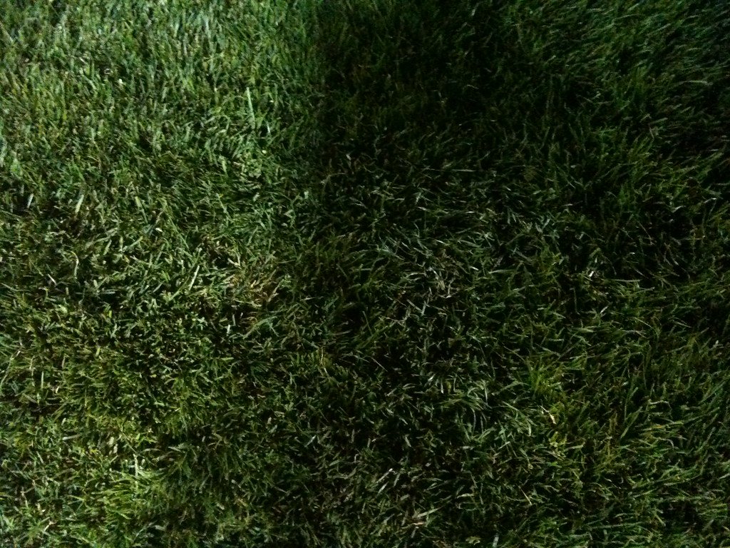 Free 3d Flower Wallpaper Grass At Night In The Park At A Concert It Looks Like