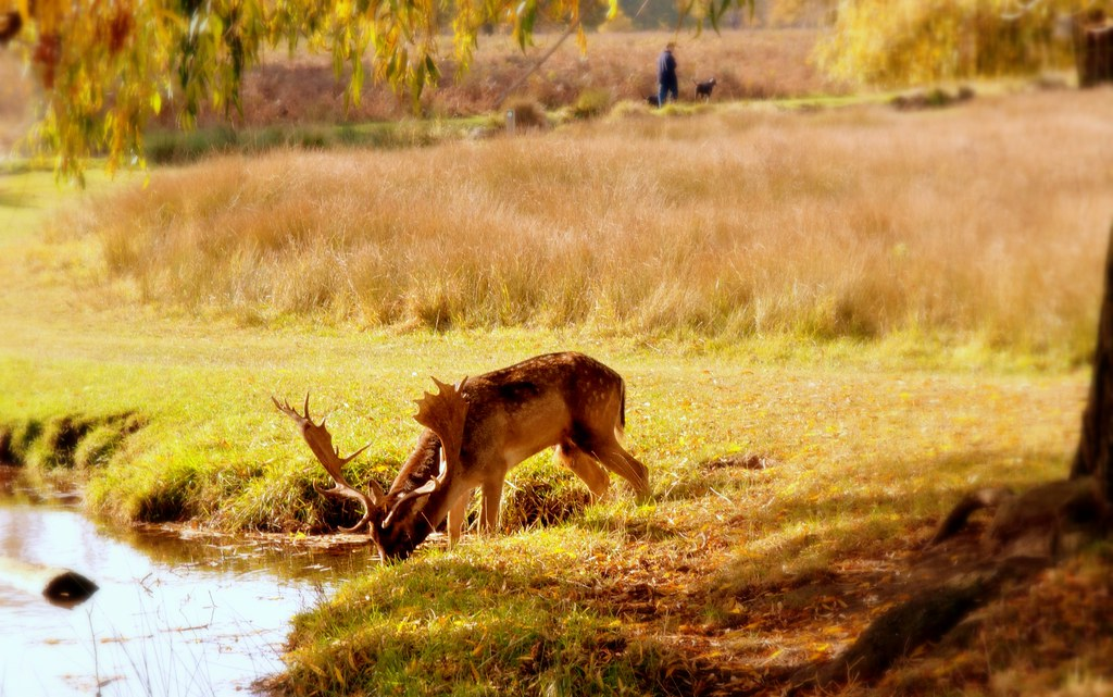 Nature Wallpaper Hd 3d As The Deer Pants For Water Hannah Swithinbank Flickr