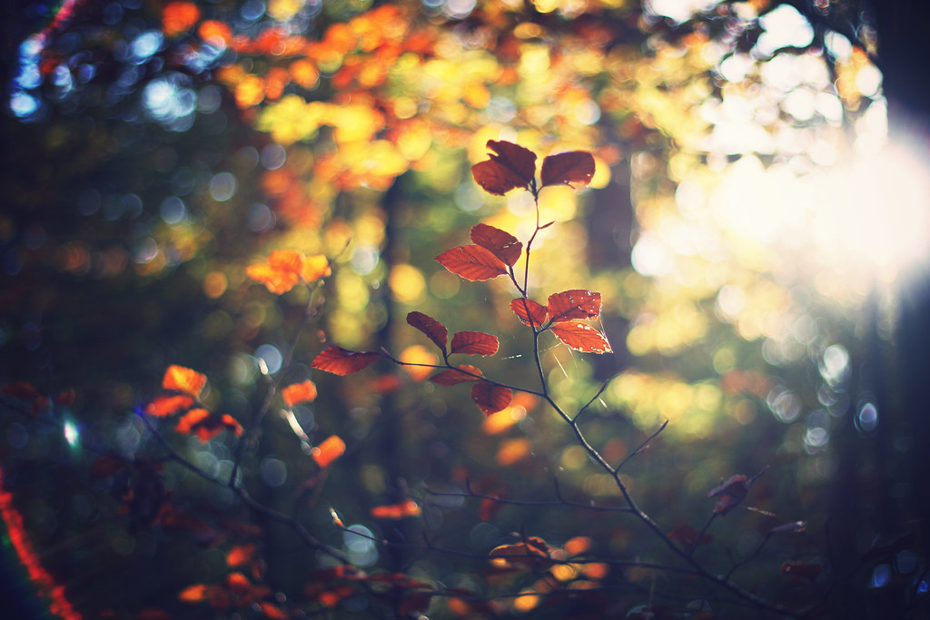 Fall Pictures For Wallpaper Free Hello Autumn Shooting For Trueflav Records Vik Flickr