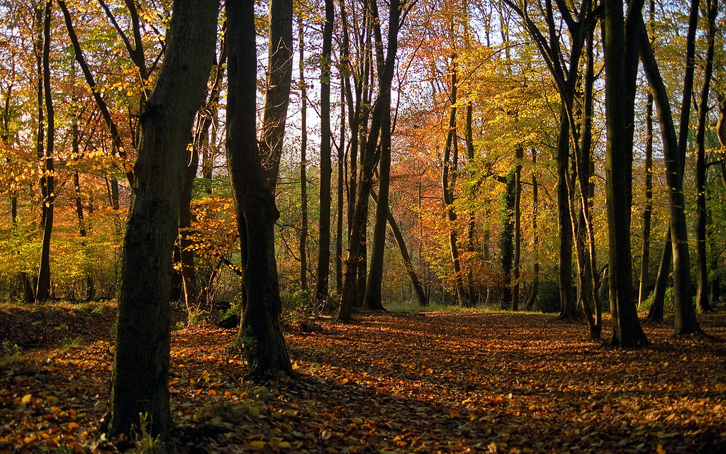 Beautiful Fall Location Wallpapers Colors Of Fall 5 Of 18 Ashridge Park Hertfordshire U