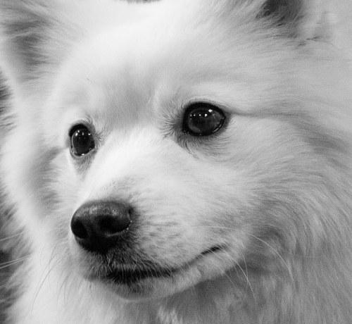 Medium Of White Fluffy Dog