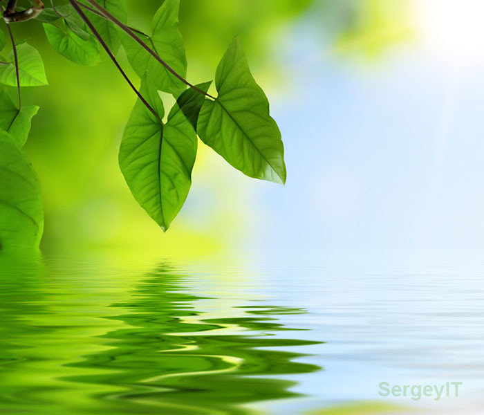 3d Water Drop Wallpaper Green Leaves And Reflection In Water Green Leaves And
