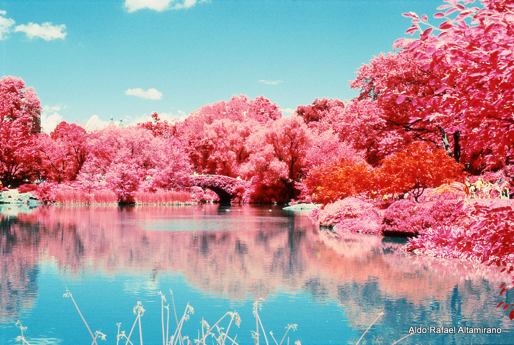 3d Red And Blue Wallpaper Dreaming With Central Park Kodak Eir Infrared Nikon F6