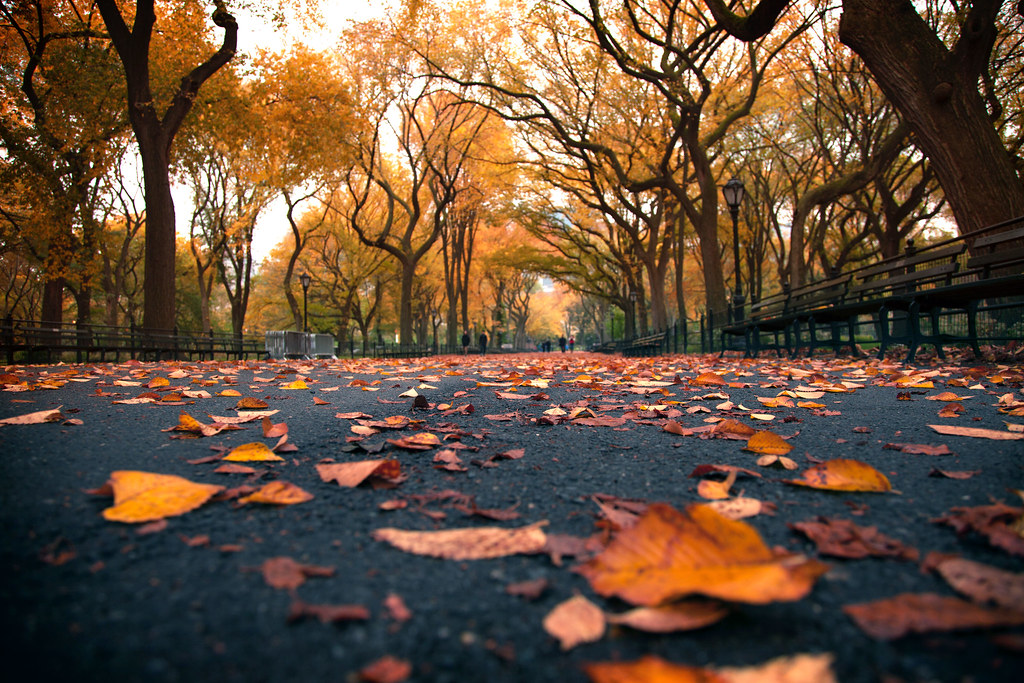 Fall Foliage Iphone Wallpaper The Yellow Brick Road United States New York New York