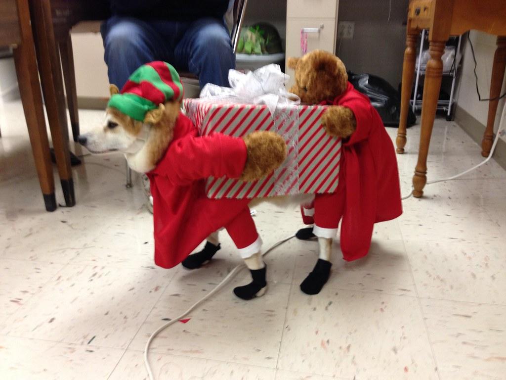 Very Cool Dog Costume for Christmas