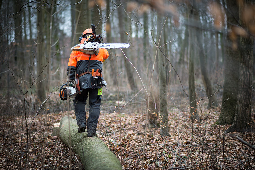3d Picture Wallpaper Reportage Stihl Wald Forstwirt 012 Jpg Henning Welslau