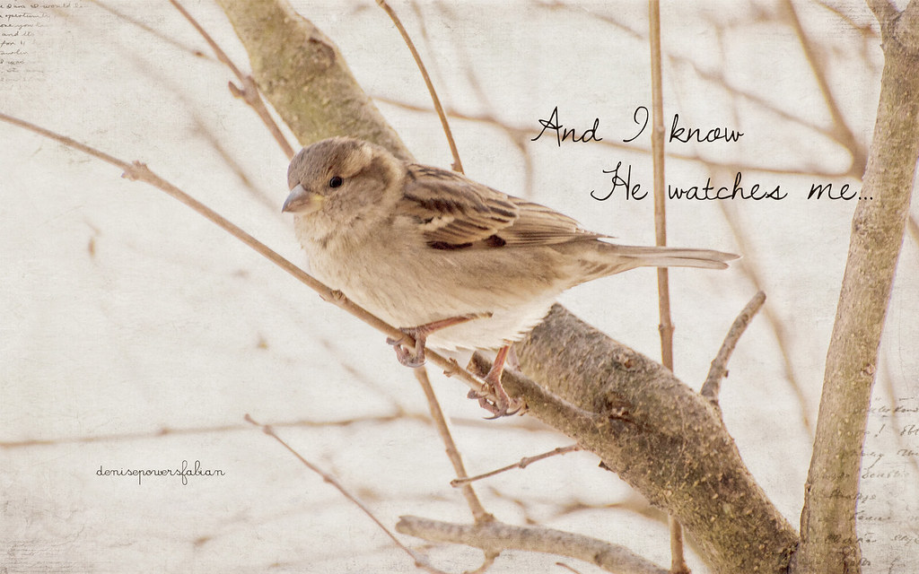 New 3d Wallpaper Download His Eye Is On The Sparrow I Know My Photos Of Arthur Are