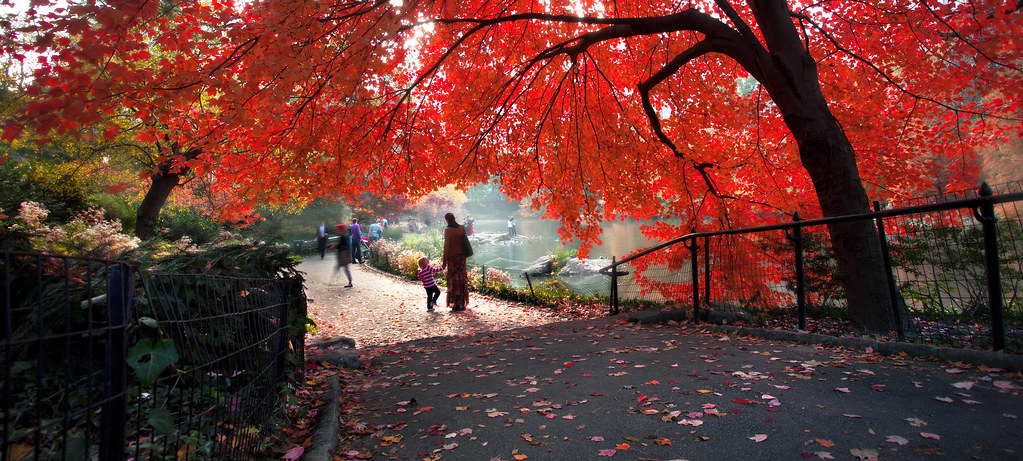 Fall In Central Park Wallpaper Nature S Curtain United States New York New York City