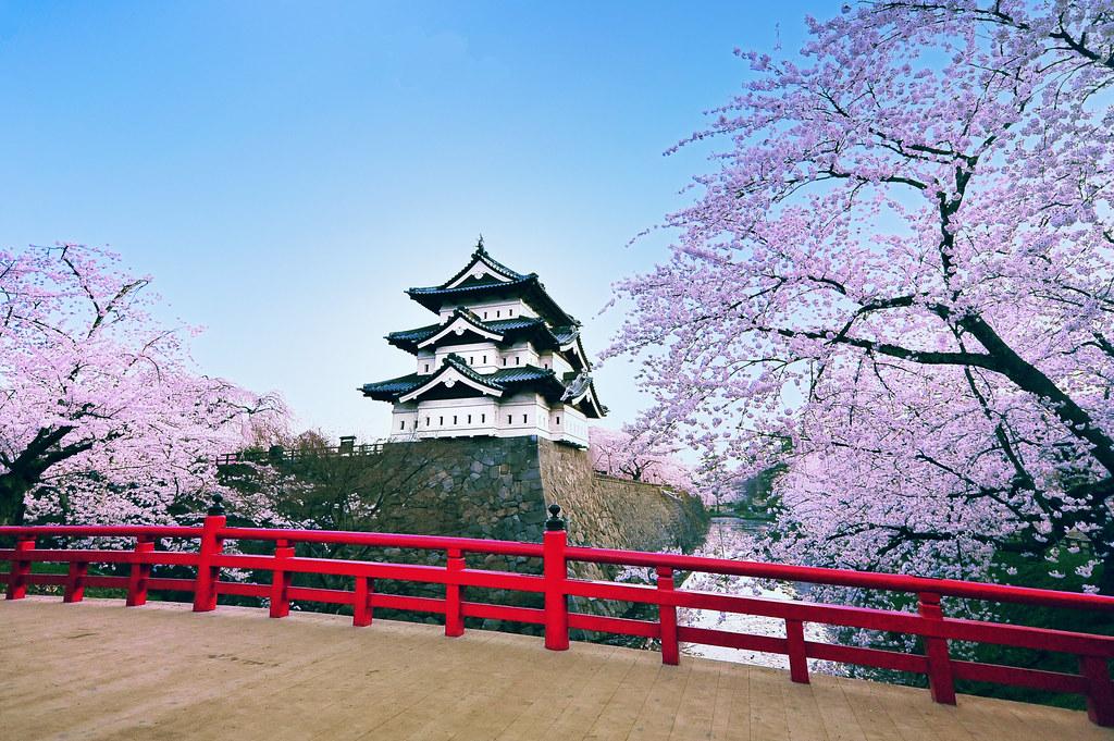 White Flower Wallpaper 3d Hirosaki Castle Japan 169 Glenn E Waters Over 5 000 Visit