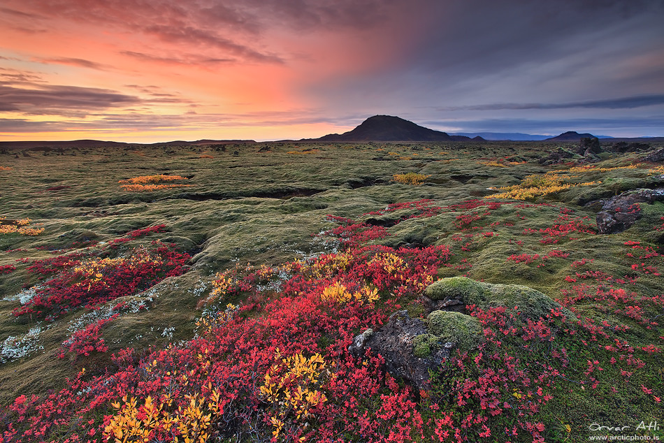Fall Winter Background Wallpaper Burst Of Color Lava Fields In Autumn Colors In Iceland