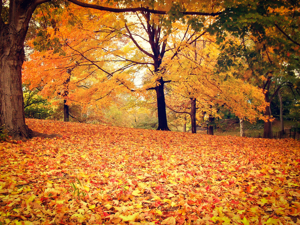 Fall Desktop Wallpaper With Pumpkins Central Park Autumn Trees And Leaves New York City