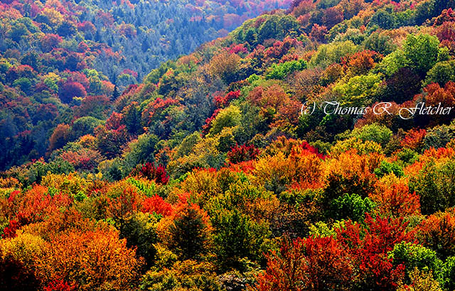 Fall Colors Wallpaper New England Fall Color Along The Highland Scenic Highway Explore
