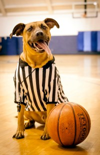 Replacement Referee Dog Costume