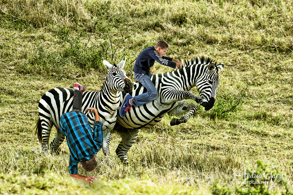 Boys Like Girls Wallpaper Boys On Safari Zebra Riding So My Mom Went On A Photo