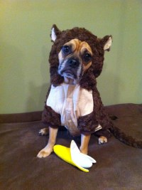 Monkey Dog Costume   Terms of Use: Please consider linking ...