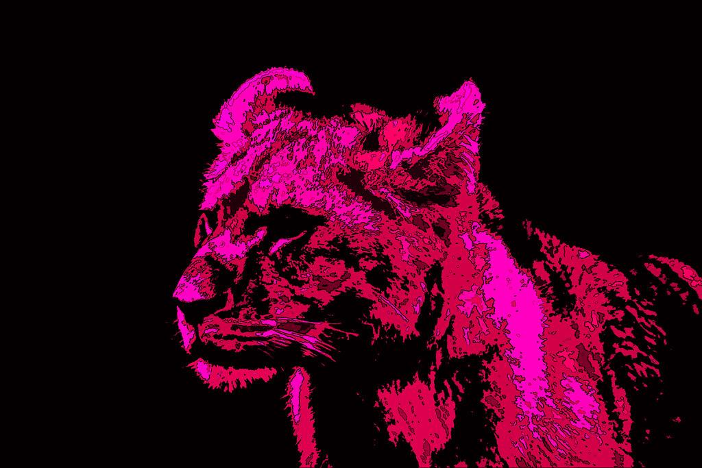 Neon Wallpaper Hd Lion Cub Neon Pink Peacockarmageddon Flickr