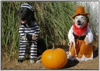 two dogs in halloween costumes funny | Terms of Use ...