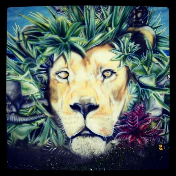 Epic Wallpapers Hd Graffiti Lion Skopje Graffiti Lion Skopje Flickr