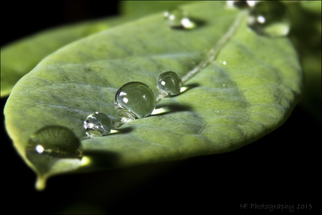 3d Water Drop Wallpaper Blueberry Leaf Morning Raindrops On A Blueberry Leaf In