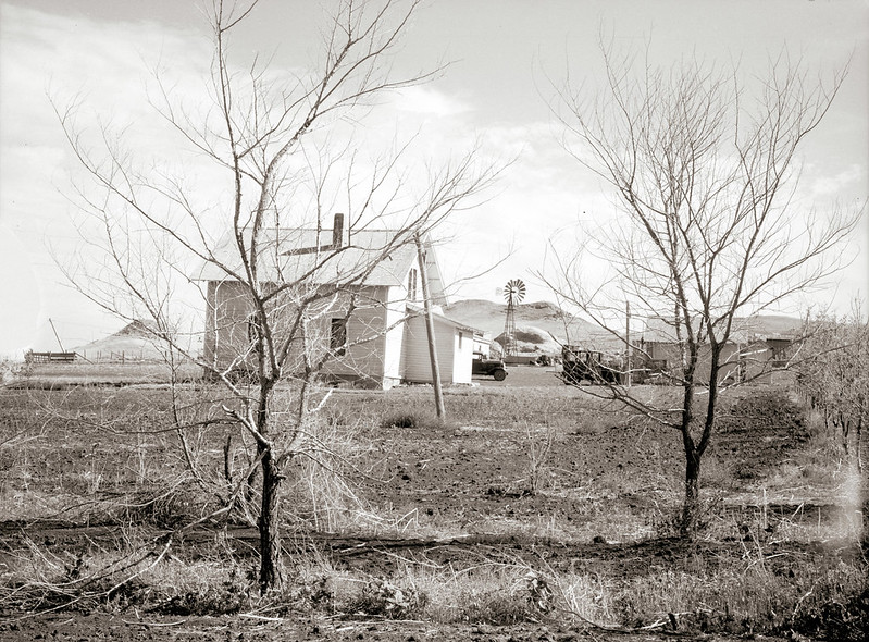 Rothstein, Arthur, photographer. Stripped bare by the drought and grasshoppers. Trees on the farm of Mrs. Emma Knoll. Grant County, North Dakota. July, 1936.