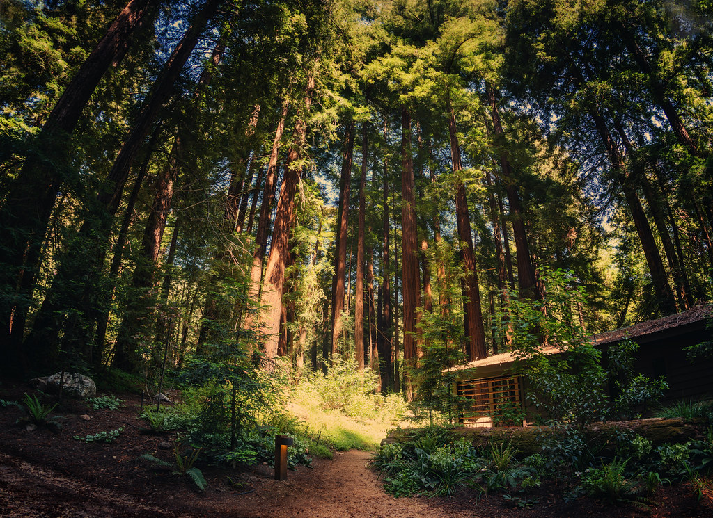 3d Nature Wallpaper For Wall The Cabin In The Forest At The Glen Oaks Big Sur These