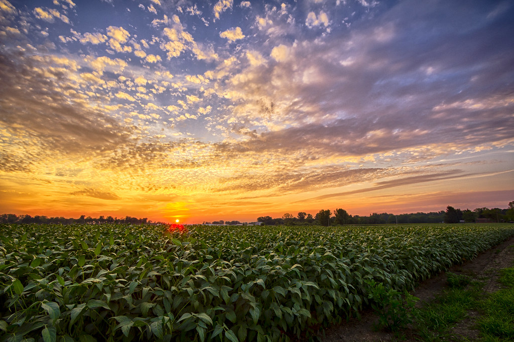 Fall Morning Sun Wallpaper 57 Indiana Bean Field Sunset Indiana Has More Than Just