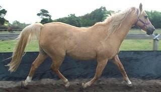 A Horse in a Round Yard