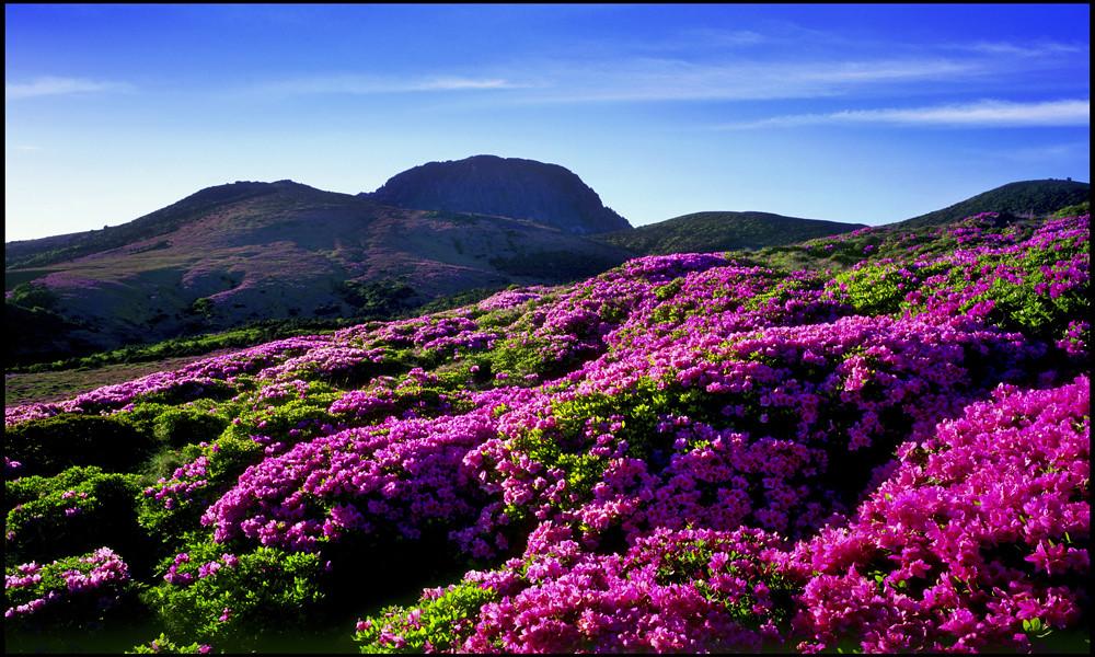 Wallpaper Korea 3d Flowers On Jeju Island 169 Jeju Special Self Governing