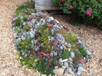Succulent rock garden | This is probably going to have to ...
