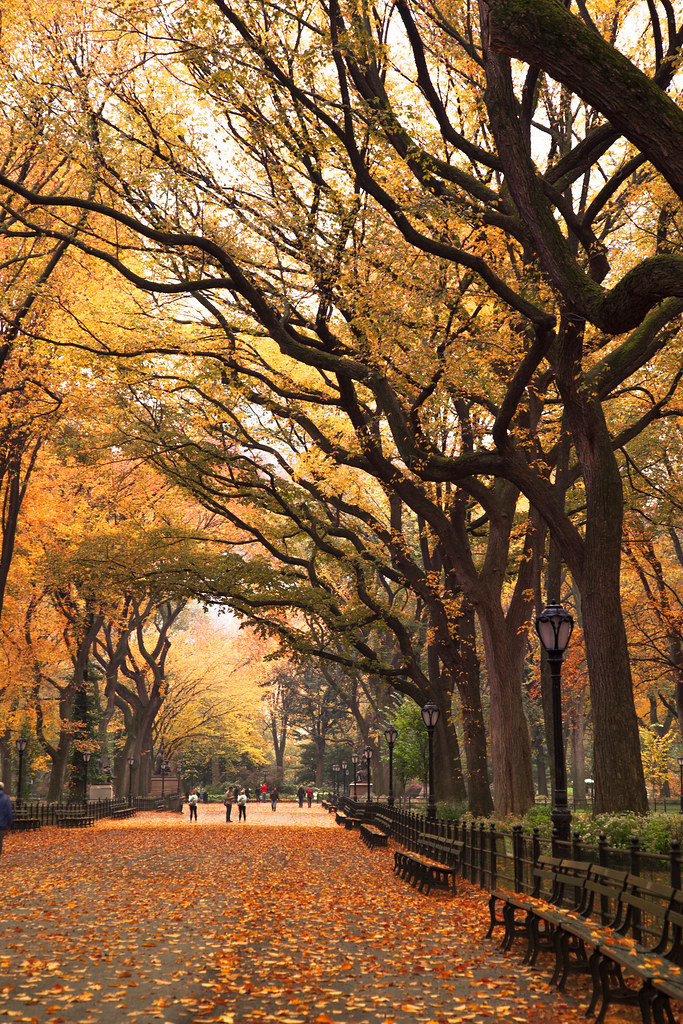 Country Fall Wallpaper Autumn Stroll United States New York New York City C