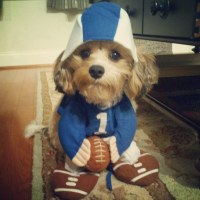 Football Costume - Dog | Terms of Use: Please consider ...