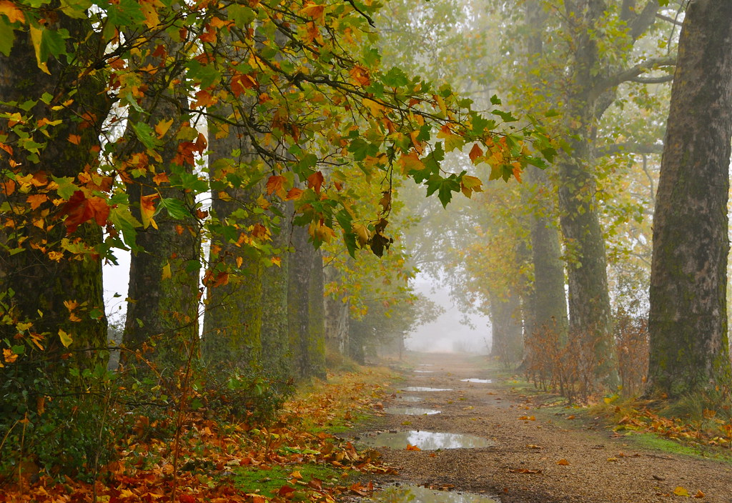 Fall Wallpaper Images Los Otros Caminos Del Lluvioso Oto 209 O Explore Flickr