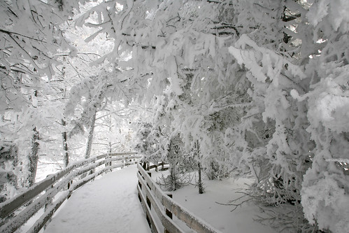 Free Animated Falling Snow Wallpaper Rime Ice Near Canary Spring Rime Ice On Trees Near