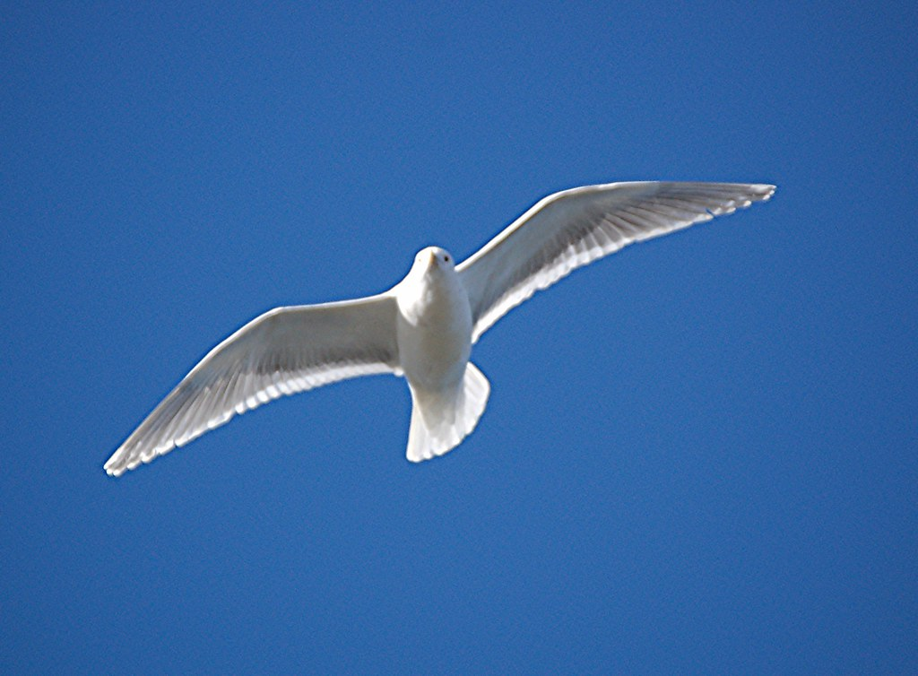 Blue Sky 3d Wallpaper Bird In Blue Sky Seagull In The Sky Yuri Levchenko