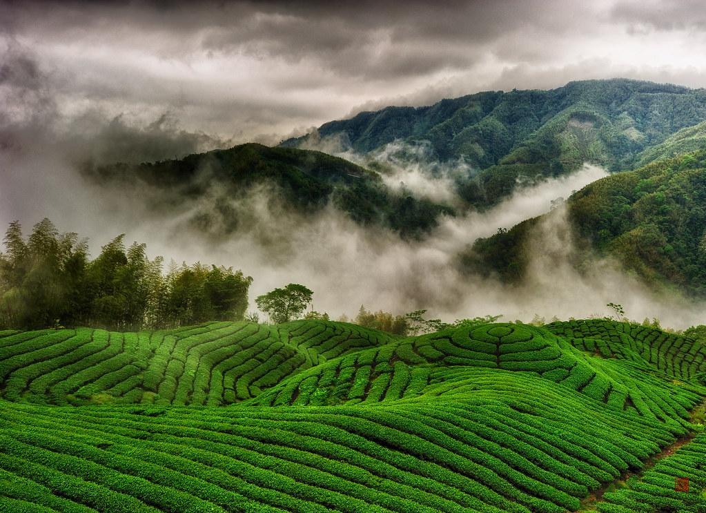 Best 3d Hd Wallpapers For Mobile F Ddf 3849 霧漫 Foggy 八卦茶園 Bagua Tea Plantation 海拔1000 公尺 Al