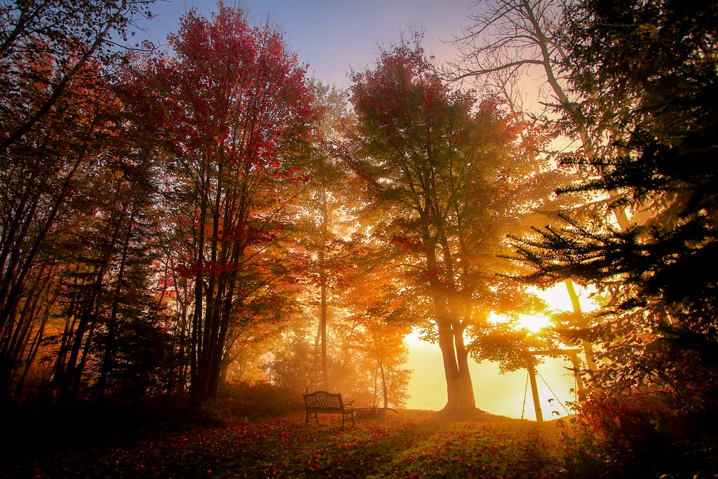 Fall Forest Wallpaper For Desktop Autumn Sunrise Looking Like The Portal To Glory The